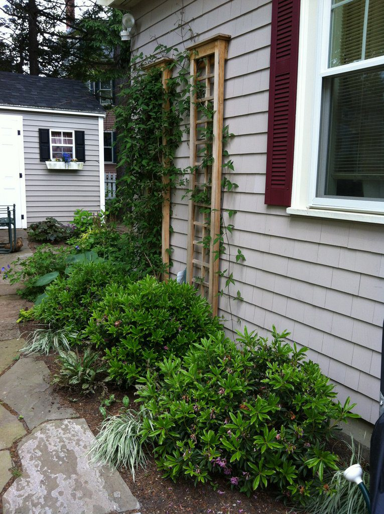 Double Trellis to Cover a Bare Spot