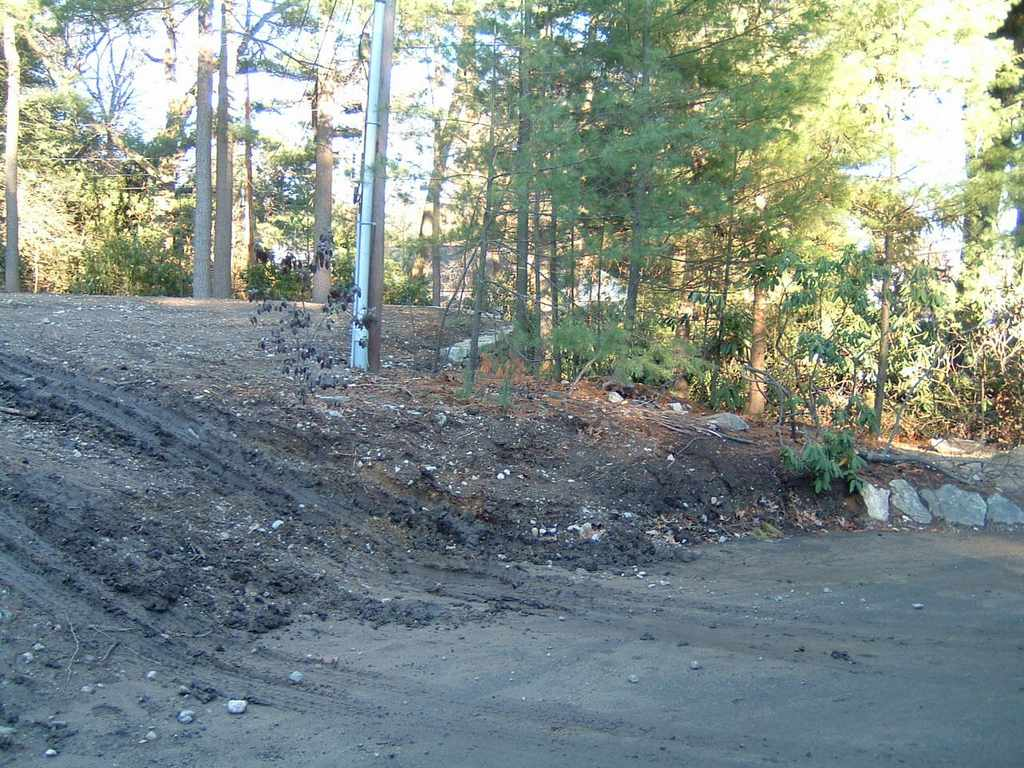 Driveway Slope (Before and cleared for planting)