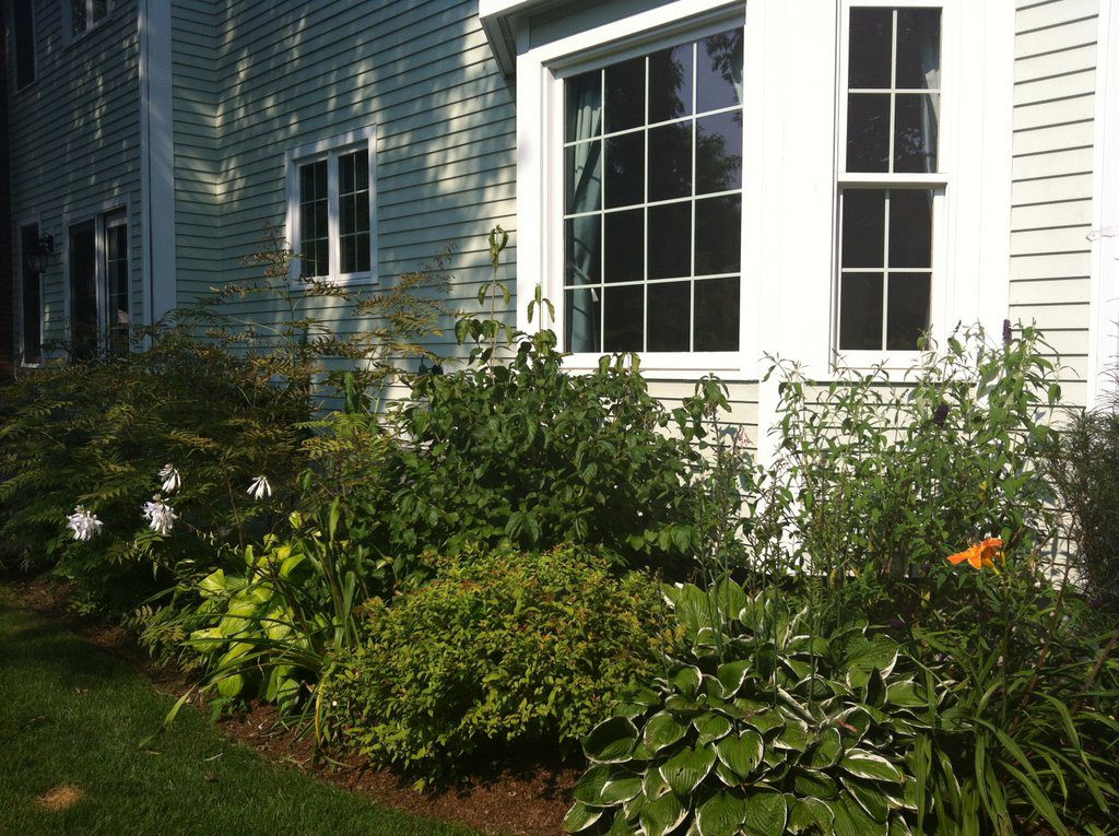 Shrub and Perennial Foundation and Screen
